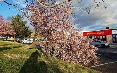 The Tale of the Fallen Tree